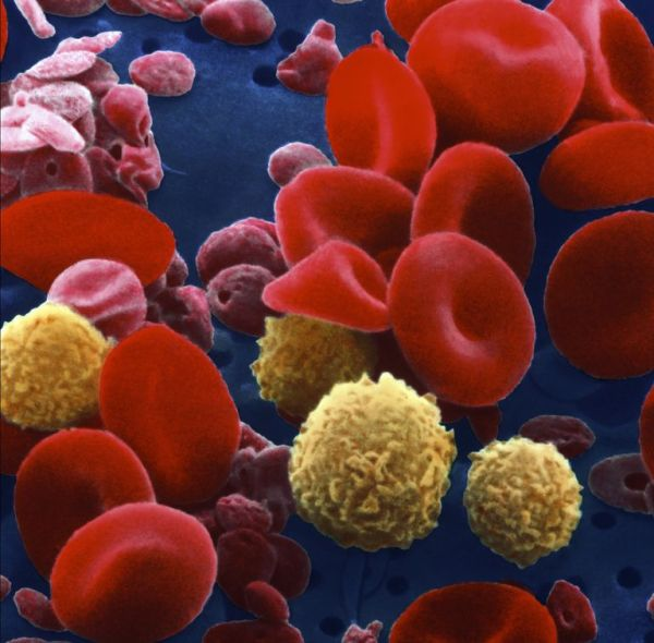 blood_cells