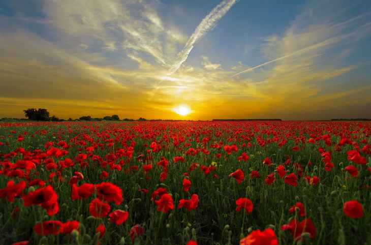 sunset-field-poppy-sun-priroda.jpg